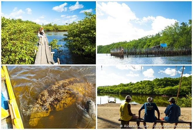 Imagens do Santuário do Peixe-Boi Marinho no Rio Tatuamunha em Porto de Pedras, Alagoas