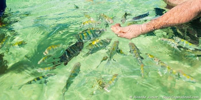 Peixes Praias de Angra dos Reis