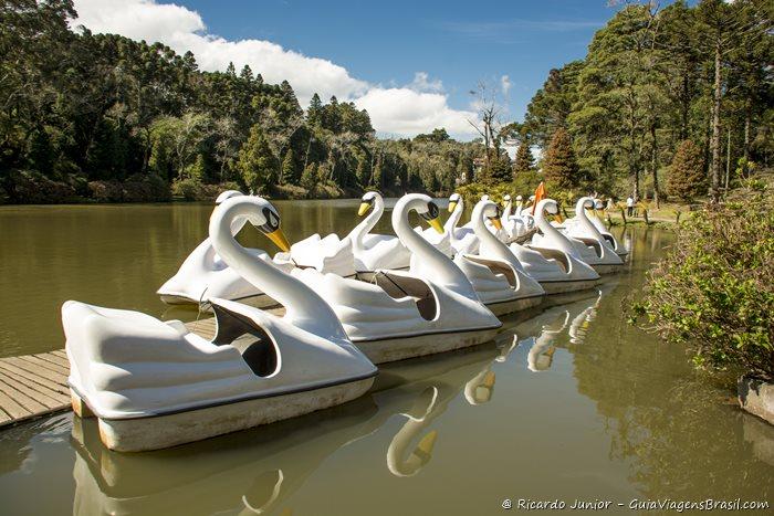 Pedalinho no Parque do Lago Negro, em Gramado - RS - Photograph by Ricardo Junior / www.ricardojuniorfotografias.com.br