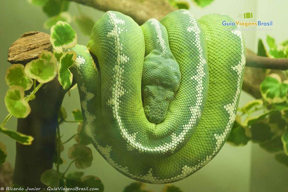 A cobra é um dos animais do Zoológico de Balneário Camboriú, em SC. Fotos de Ricardo Junior / www.ricardojuniorfotografias.com.br