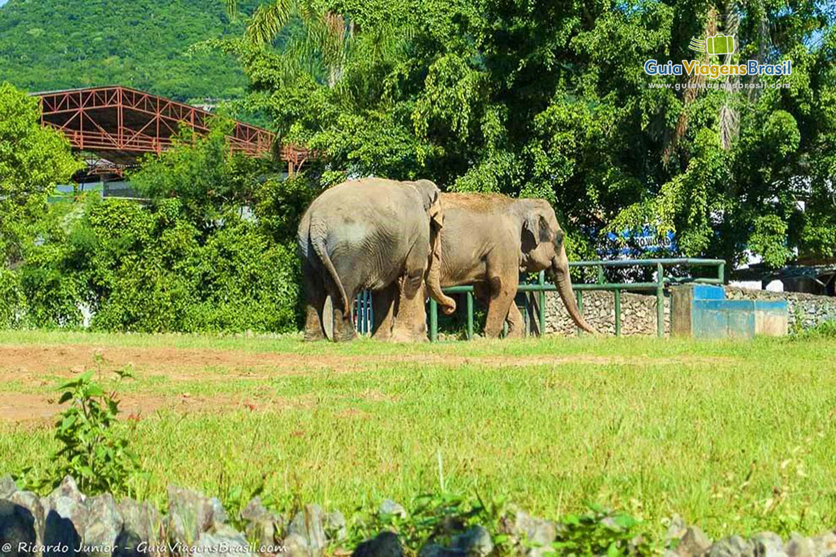 elefantes-beto-carreiro-penha-sc