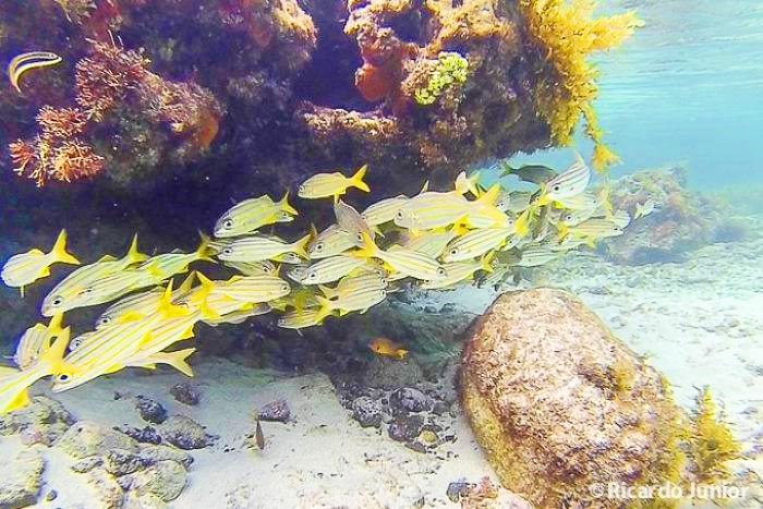 Peixinhos coloridos observado durante mergulho em Fernando de Noronha, PE. Fotos de Ricardo Junior / www.ricardojuniorfotografias.com.br