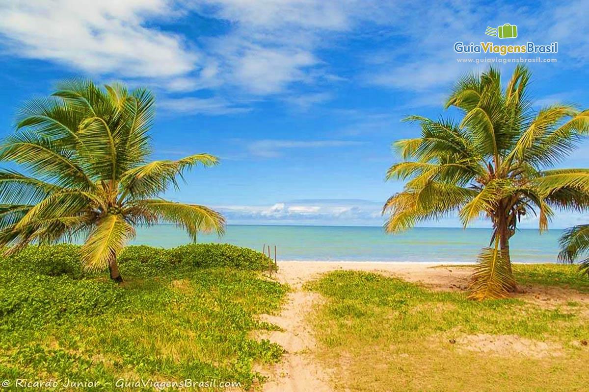 coqueiros-praia-intermares-joao-pessoa-pb