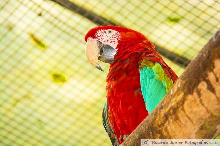 fotografia-araras-parque-das-aves-em-foz-do-iguacu-parana-brasil-foto-7377