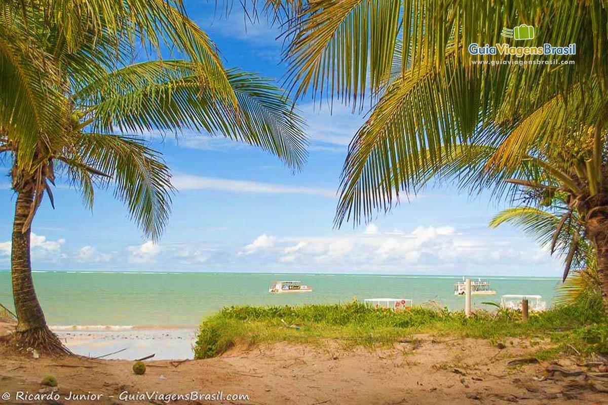 coqueiros-praia-poco-joao-pessoa-pb