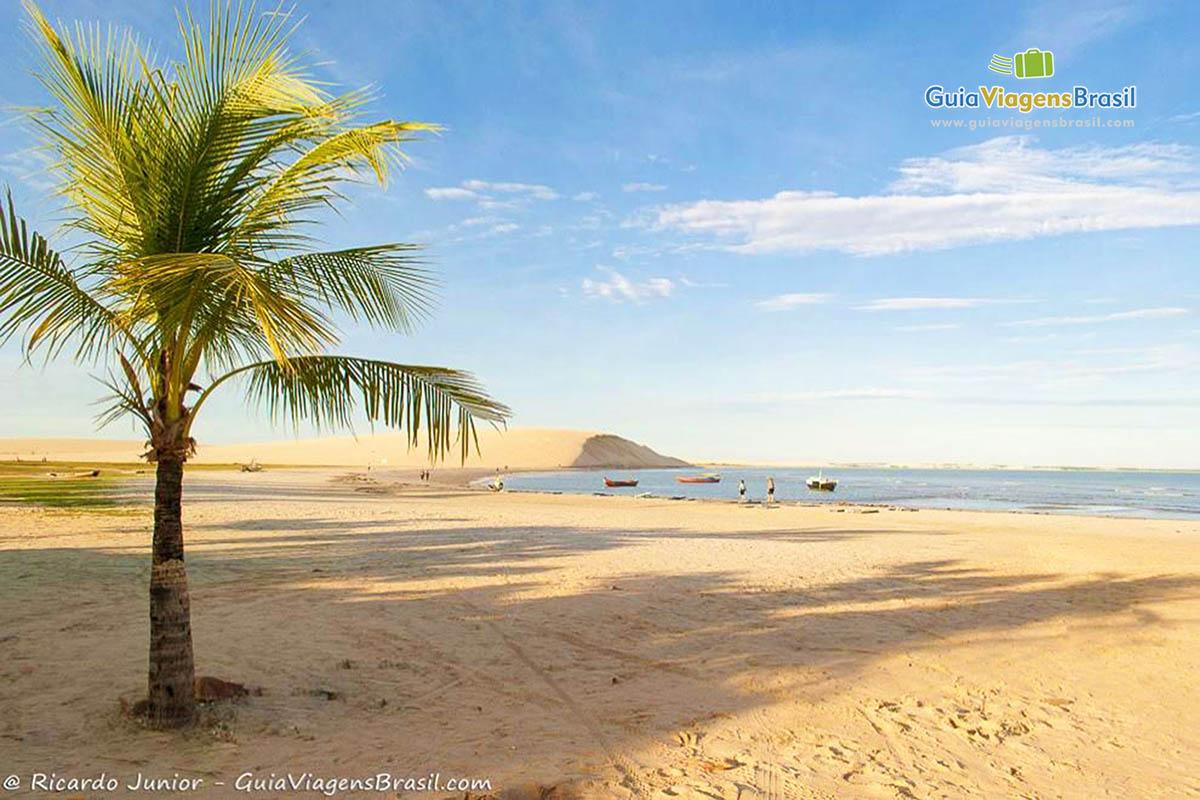 coqueiro-praia-jericoacoara-ceara