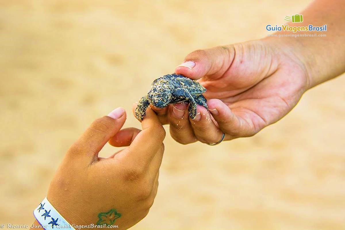 pequena-tartaruga-praia-do-forte-ba