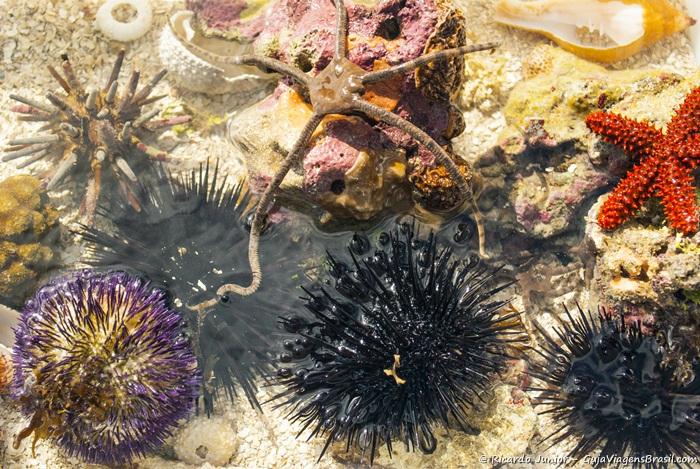 Imagem de lindo e coloridos corais nas piscinas naturais de Paripueira. - Photograph by Ricardo Junior / www.ricardojuniorfotografias.com.br