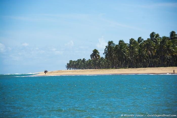 Imagem do coqueiral na Praia do Gunga - Photograph by Ricardo Junior / www.ricardojuniorfotografias.com.br