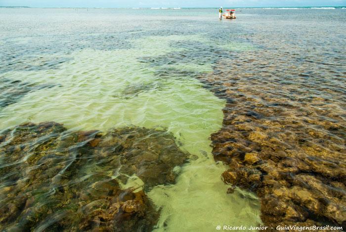 As piscinas naturais do Toque são um verdadeiroaquário natural. - Photograph by Ricardo Junior / www.ricardojuniorfotografias.com.br