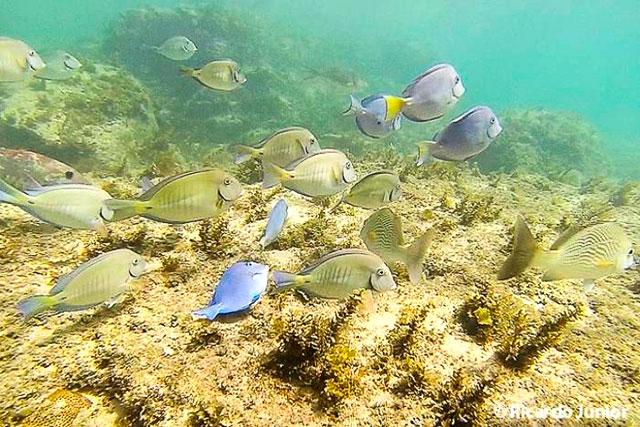 Foto de peixes durante mergulho em Fernando de Noronha. Photograph by Ricardo Junior / www.ricardojuniorfotografias.com.br