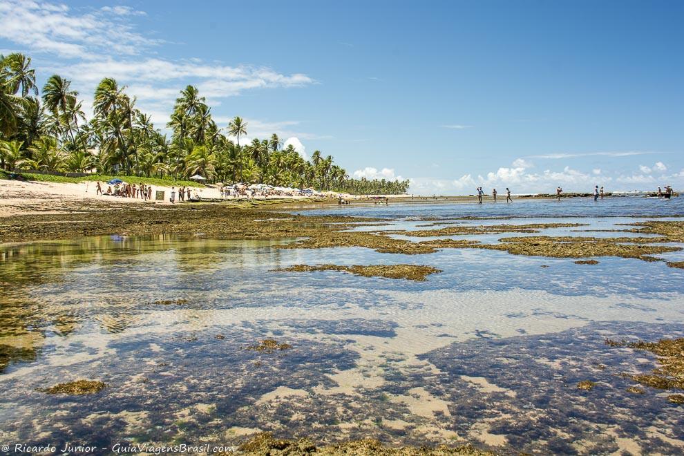 Coqueiros emolduram as piscinas naturais formadas pelas faixas de recifes, na Praia do Forte, Bahia. Photograph by Ricardo Junior / www.ricardojuniorfotografias.com.br