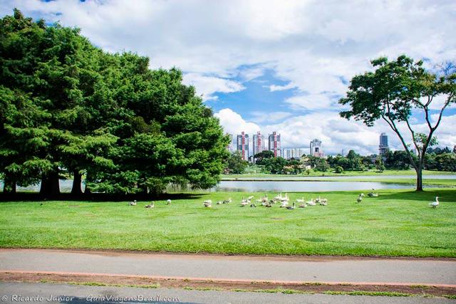 Parque Barigui, um dos mais antigos de Curitiba, no Paraná. Photograph by Ricardo Junior / www.ricardojuniorfotografias.com.br