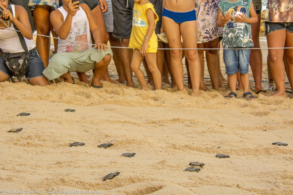 Turistas olham com atenção as pequenas tartarugas andando em direção ao mar - de novembro a maio, no Projeto Tamar, Praia do Forte, Bahia. Photograph by Ricardo Junior / www.ricardojuniorfotografias.com.br