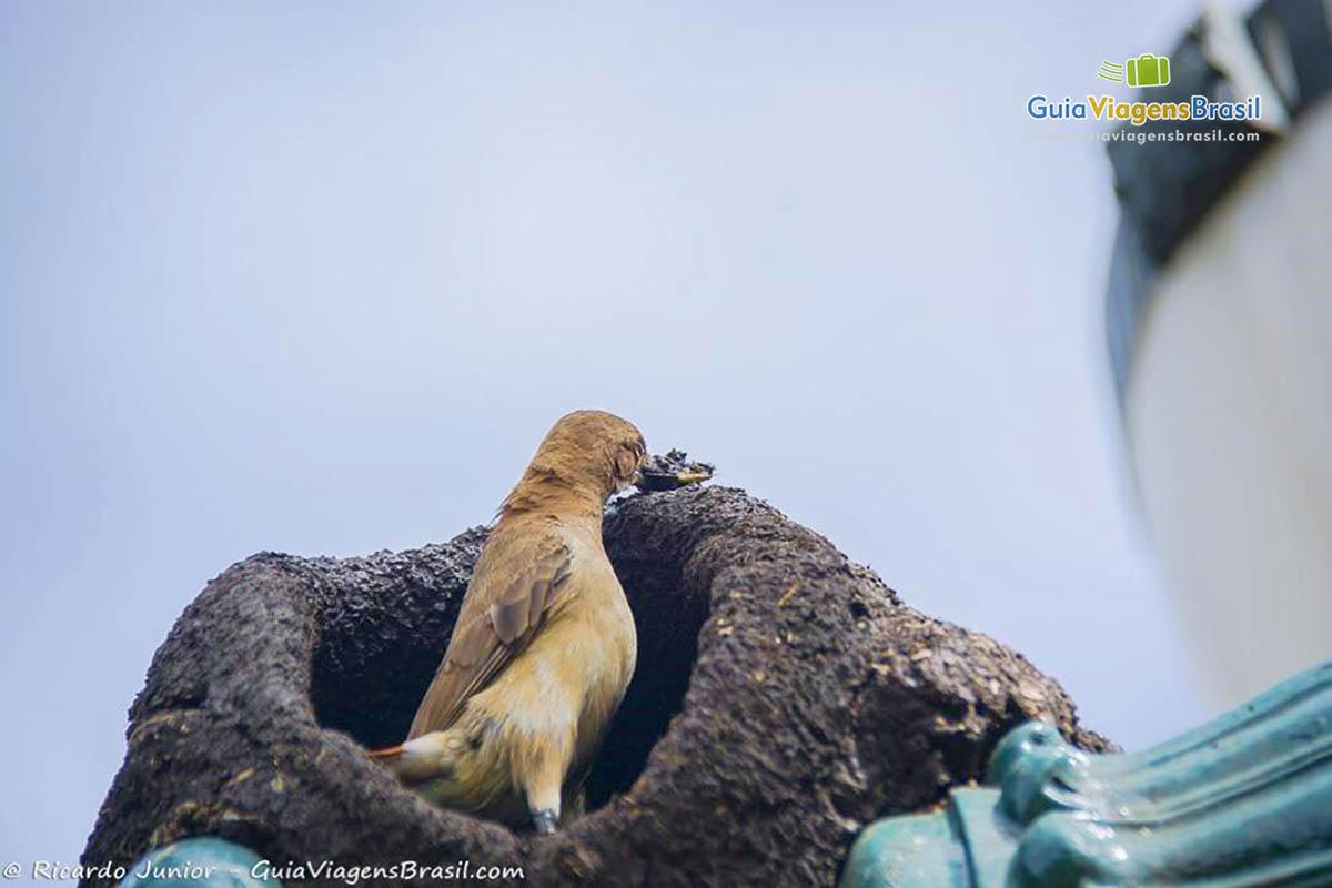 Os ninhos dos passarinhos em áreas do Jardim Botânico, sintonia com a natureza em Curitiba, PR.Fotos de Ricardo Junior / www.ricardojuniorfotografias.com.br