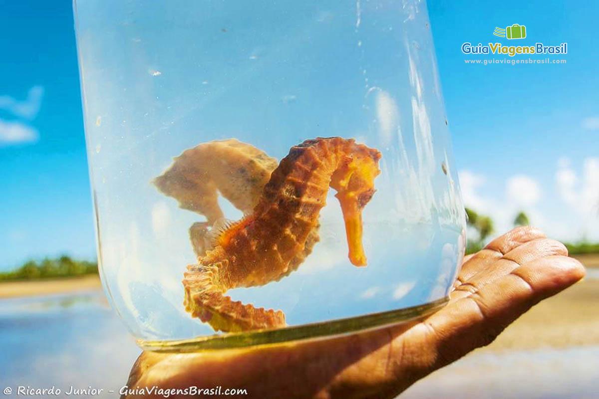 imagem-blog-cavalos-marinhos-no-passeio-pelo-rio-maracaipr-em-porto-de-galinhas-pernambuco