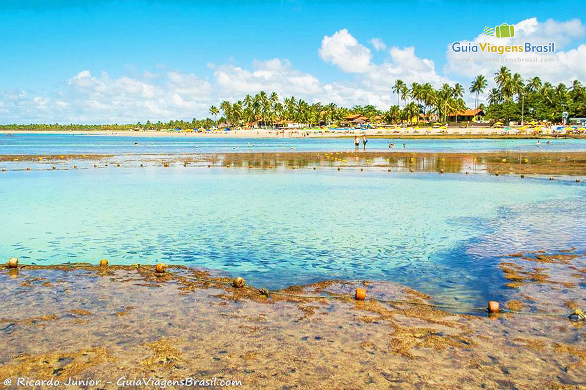 imagem-blog-piscinas-naturais-de-porto-de-galinhas-pernambuco