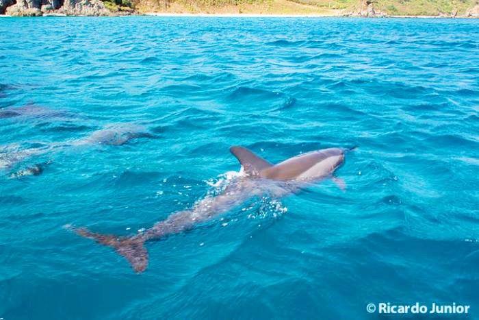 foto-mergulho-golfinho-em-fernando-de-noronha