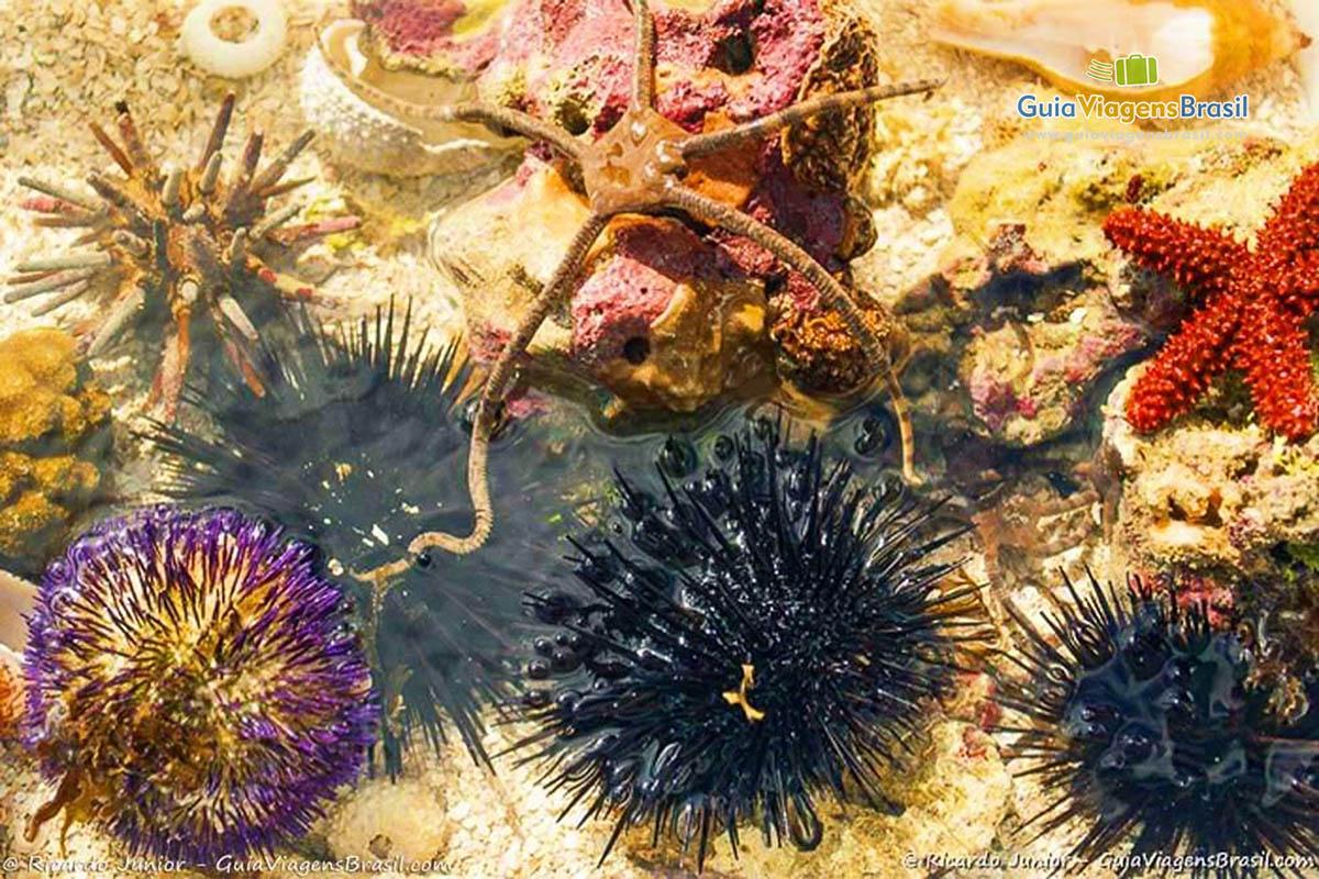 corais-piscinas-naturais-paripueira-maceio-alagoas