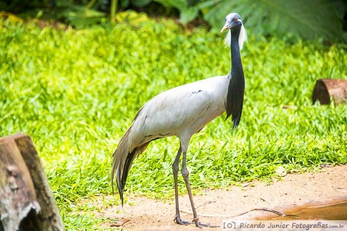 aves-parque-das-aves-em-foz-do-iguacu-parana-brasil-foto-7296