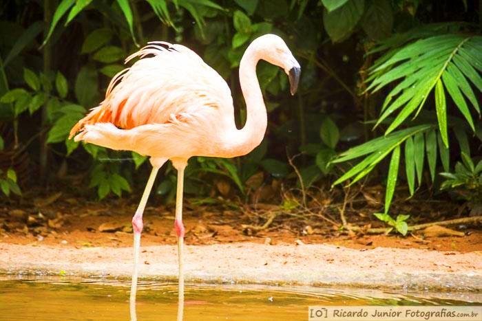 foto-aves-parque-das-aves-em-foz-do-iguacu-parana-brasil-foto-7303