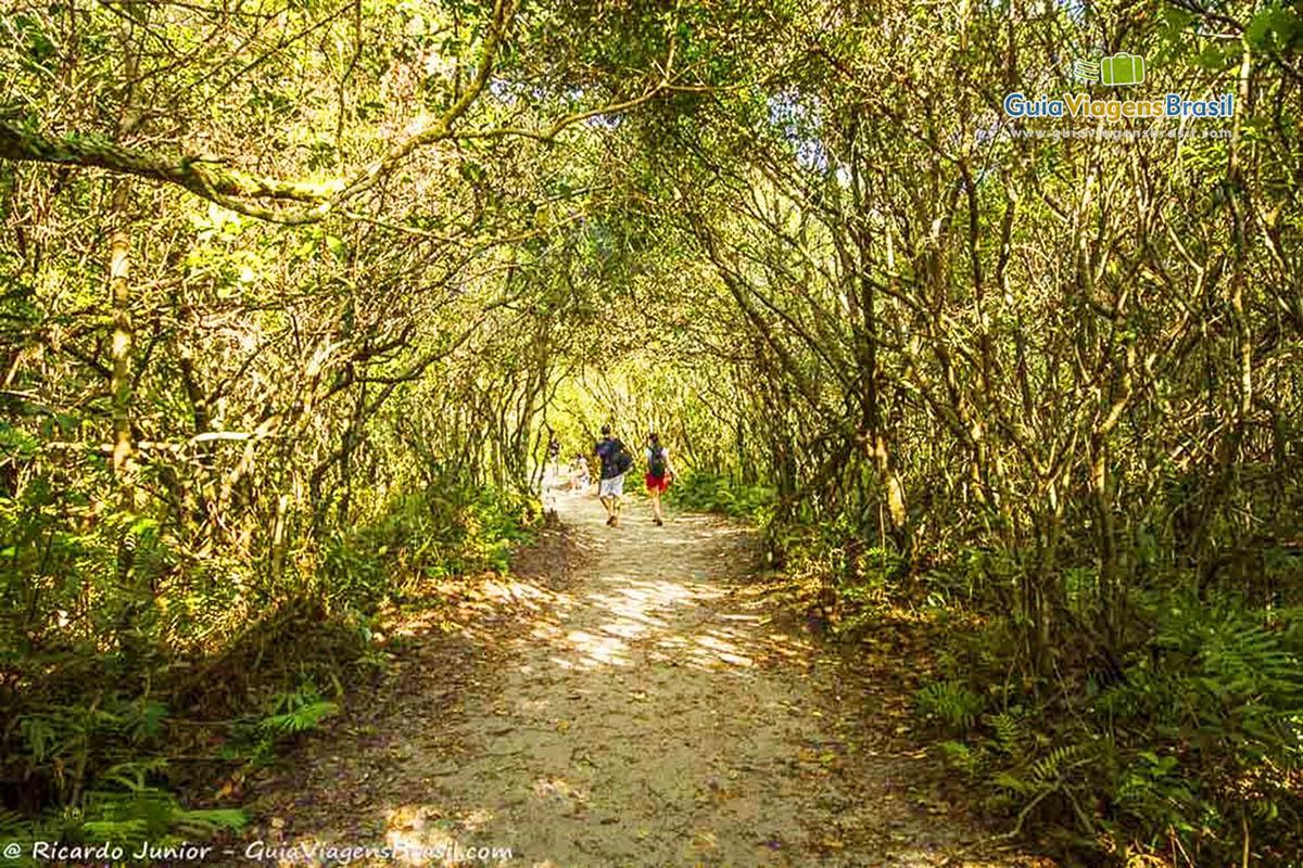 foto-praia-grande-em-ilha-do-mel-parana-brasil-foto-5110