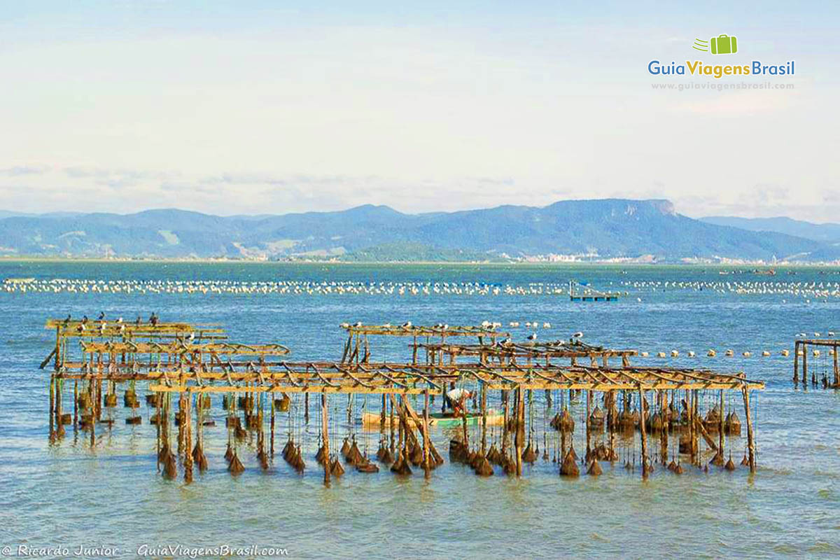ostras-praia-ribeira-da-ilha-florianopolis-sc
