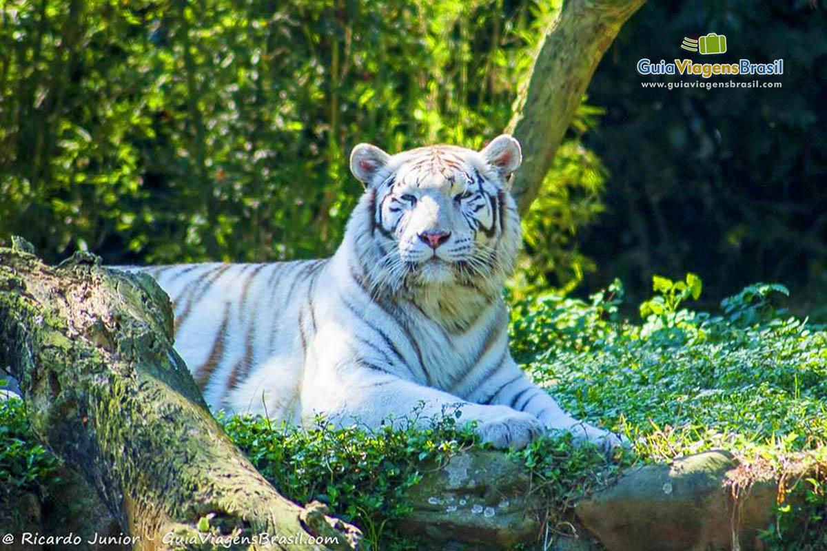 foto-leopardo-zoologico-sp