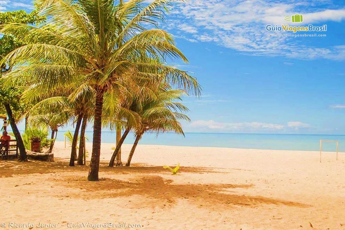 coqueiros-praia-camboinha-joao-pessoa-pb
