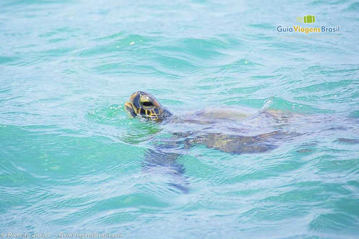 tartaruga-praia-do-pinto-ilhabela-sp
