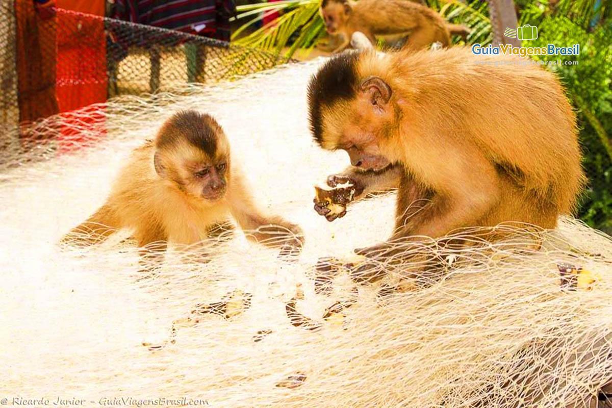 casal-macaco-circuito-cabure-barreirinhas