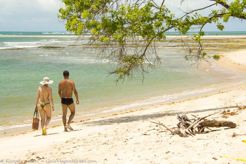 Imagem das belezas da natureza, árvores no meio da Ilha de Boipeba-Bahia-BA