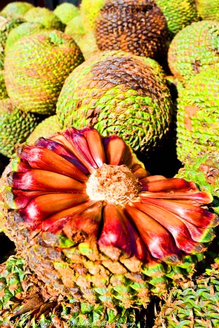 foto-turismo-rural-e gastronomia-em-urubici-sc-brasil-0364