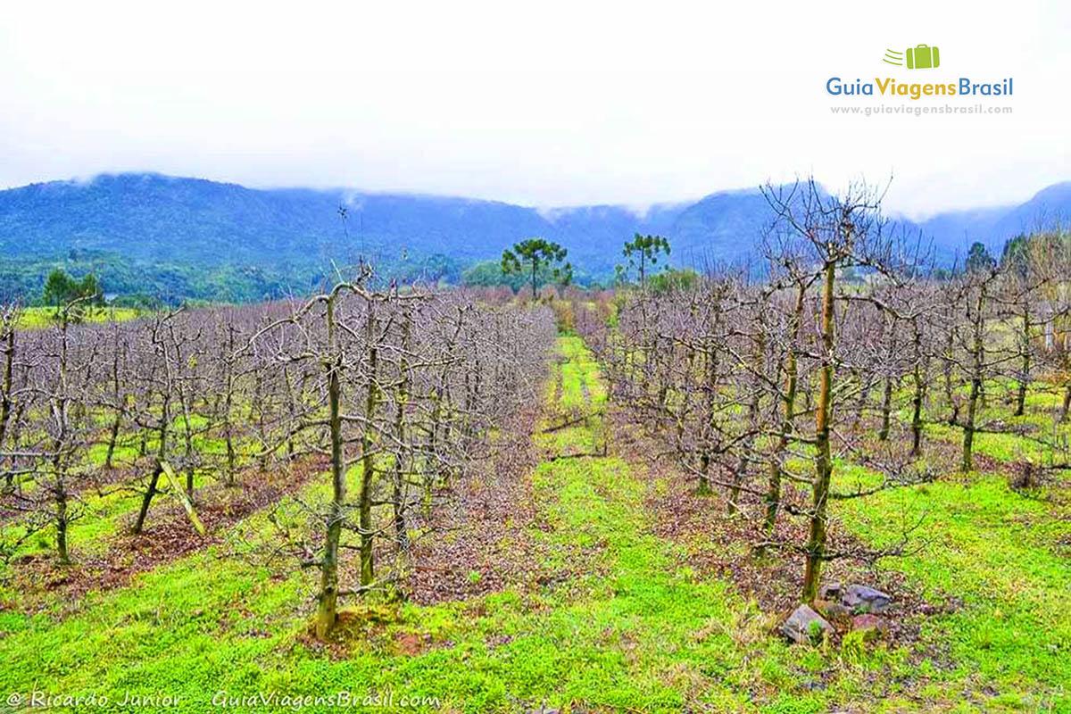 foto-turismo-rural-e gastronomia-em-urubici-sc-brasil-0768