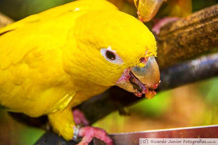 Foto Parque das Aves, Foz do Iguaçu, PR.