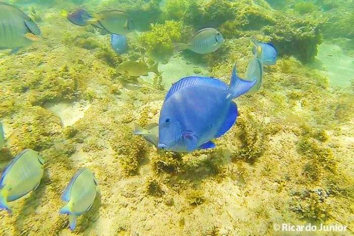 Foto peixinhos coloridos mergulho Fernando de Noronha, PE.