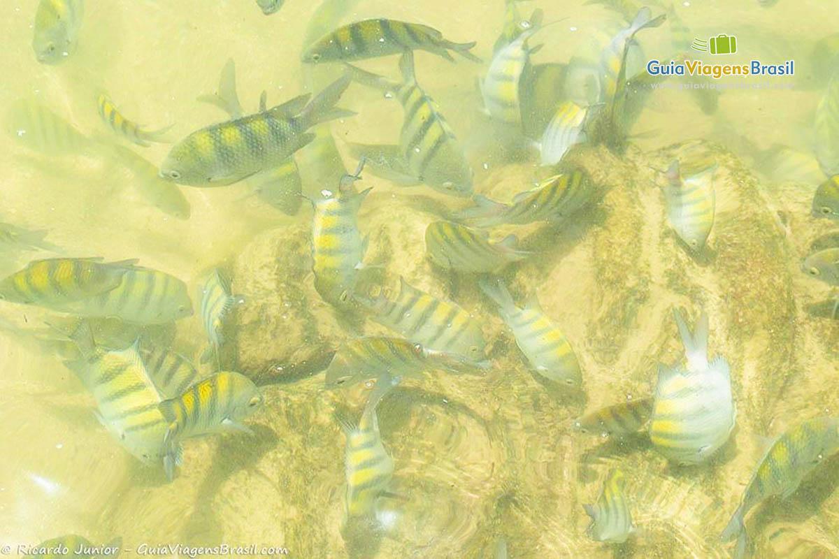 Foto peixinhos coloridos na praia.
