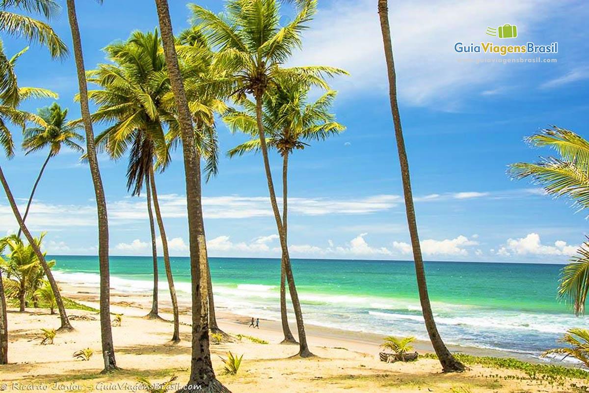 http://www.guiaviagensbrasil.com/imagens/coqueiros-praia-de-arembepe-ba.jpg